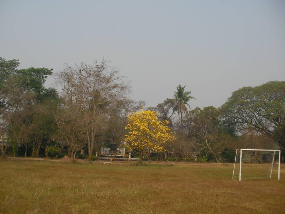 เหลืองอินเดียที่โรงเรียนพงษ์สวัสดิ์